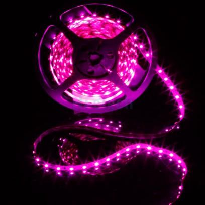 Tira LED flexible luz rosa - TIST2835-60KP